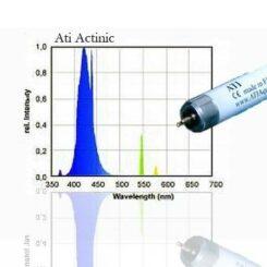 ATI Actinic blue 54W