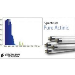D-D Giesemann pure actinic /super actinic 80W