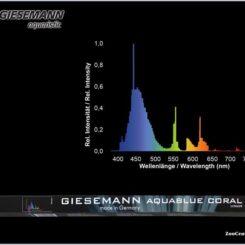 D-D Giesemann Aquablue +/Aquablue coral 54W